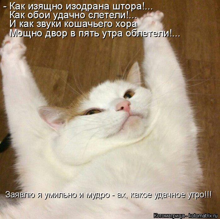 Котоматрица: - Как изящно изодрана штора!... Как обои удачно слетели!... И как звуки кошачьего хора Мощно двор в пять утра облетели!... Заявлю я умильно и мудр