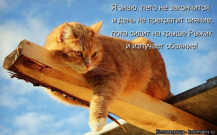Котоматрица: Я знаю, лето не закончится,  и день не прекратит сияние,  пока сидит на крыше Рыжик и излучает обаяние!