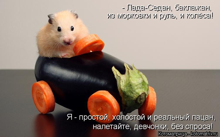 Котоматрица: из морковки и руль, и колёса!   Я - простой, холостой и реальный пацан, - Лада-Седан, баклажан,   налетайте, девчонки, без спроса!