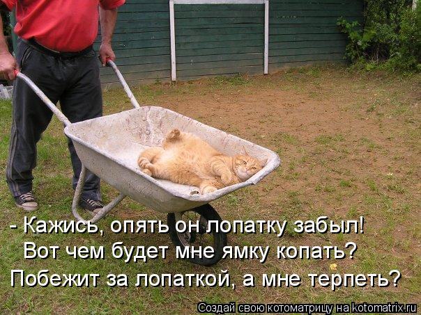 Котоматрица: - Кажись, опять он лопатку забыл! Вот чем будет мне ямку копать? Побежит за лопаткой, а мне терпеть?