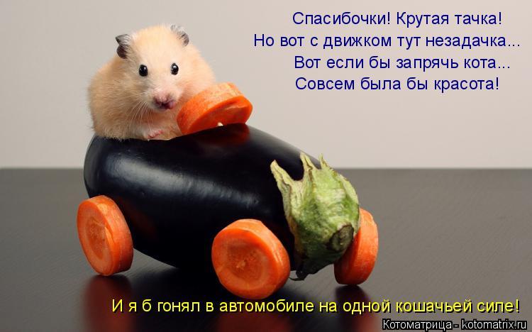 Котоматрица: Спасибочки! Крутая тачка! Но вот с движком тут незадачка... Вот если бы запрячь кота... Совсем была бы красота! И я б гонял в автомобиле на одно