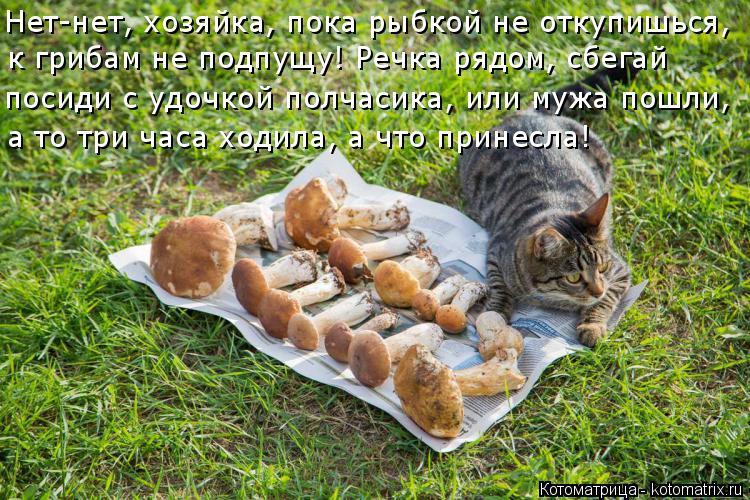 Котоматрица: Нет-нет, хозяйка, пока рыбкой не откупишься, к грибам не подпущу! Речка рядом, сбегай посиди с удочкой полчасика, или мужа пошли, а то три часа