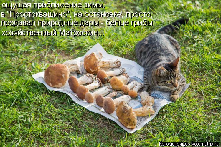 """Котоматрица: ощущая приближение зимы, продавал природные дары - белые грибы, хозяйственный Матроскин... в """"Простоквашино"""", на остановке, просто,"""