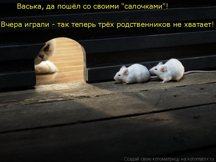 """Котоматрица: Васька, да пошёл со своими """"салочками""""! Вчера играли - так теперь трёх родственников не хватает!"""