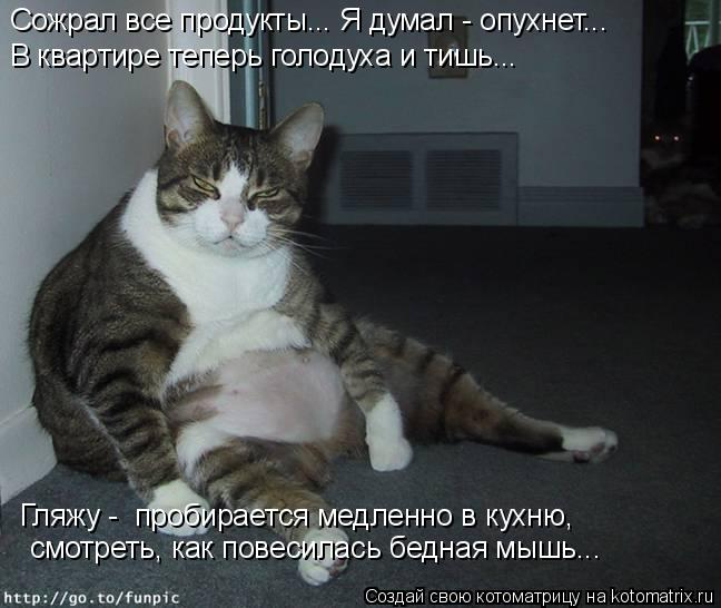 Котоматрица: Сожрал все продукты... Я думал - опухнет... смотреть, как повесилась бедная мышь... В квартире теперь голодуха и тишь... Гляжу -  пробирается медл