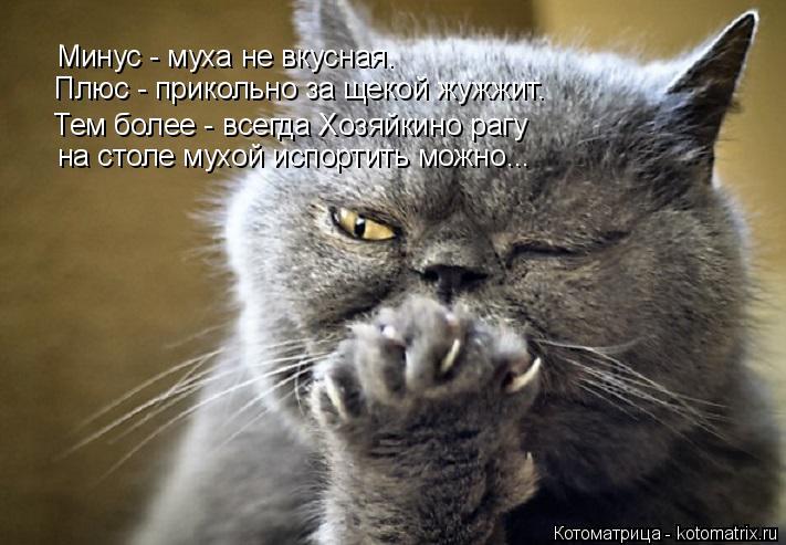 Котоматрица: Минус - муха не вкусная. Плюс - прикольно за щекой жужжит. Тем более - всегда Хозяйкино рагу на столе мухой испортить можно...