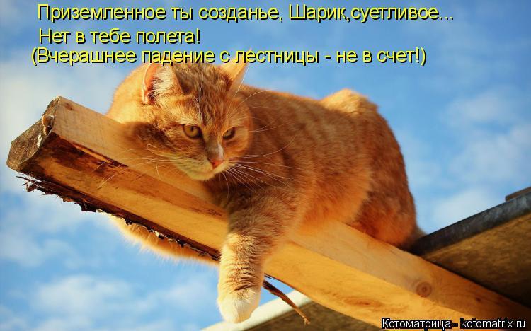 Котоматрица: Приземленное ты созданье, Шарик,суетливое... Нет в тебе полета! (Вчерашнее падение с лестницы - не в счет!)