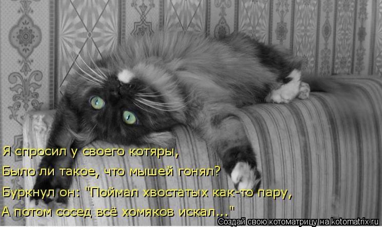 """Котоматрица: Я спросил у своего котяры, Было ли такое, что мышей гонял? Буркнул он: """"Поймал хвостатых как-то пару, А потом сосед всё хомяков искал..."""""""