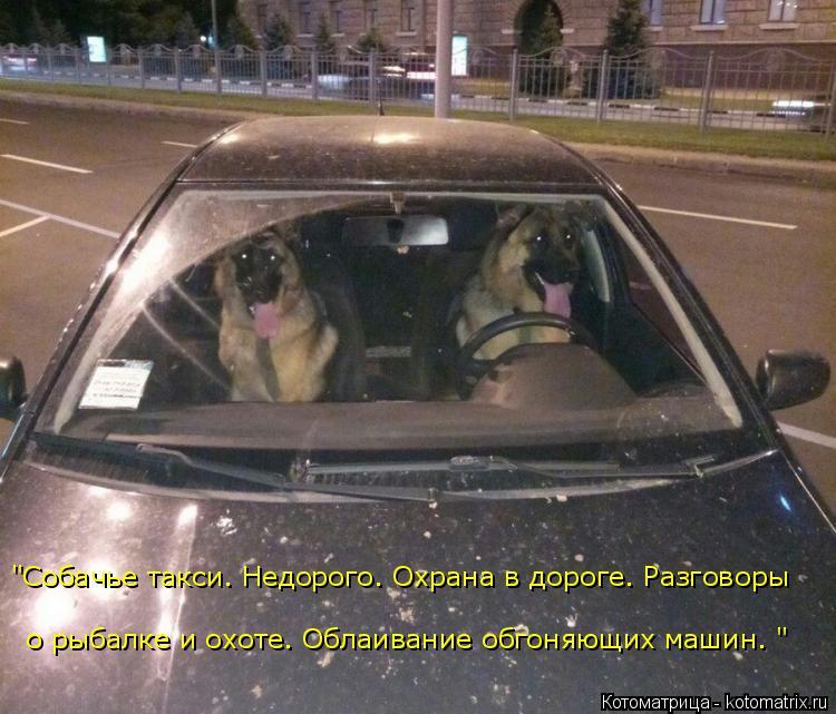 """Котоматрица: о рыбалке и охоте. Облаивание обгоняющих машин. """" """"Собачье такси. Недорого. Охрана в дороге. Разговоры"""