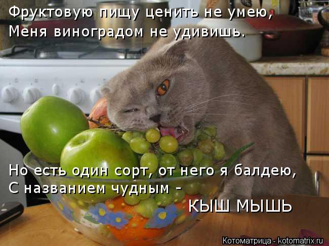 Котоматрица: Фруктовую пищу ценить не умею, Меня виноградом не удивишь. Но есть один сорт, от него я балдею, С названием чудным - КЫШ МЫШЬ
