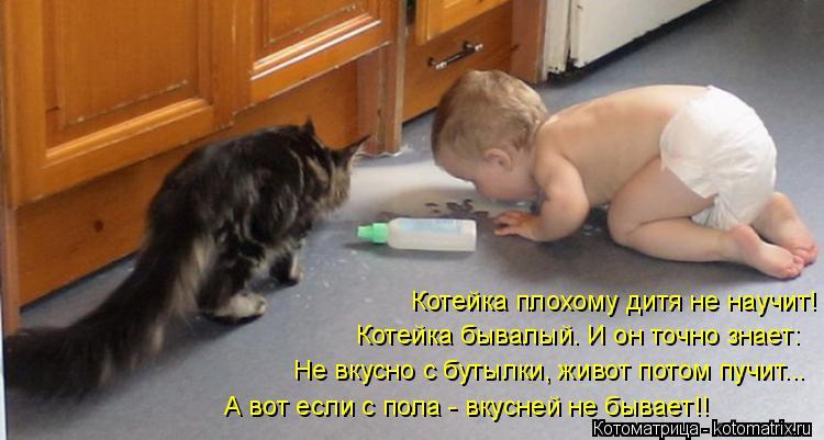 Котоматрица: Котейка плохому дитя не научит! Котейка бывалый. И он точно знает: Не вкусно с бутылки, живот потом пучит... А вот если с пола - вкусней не быва