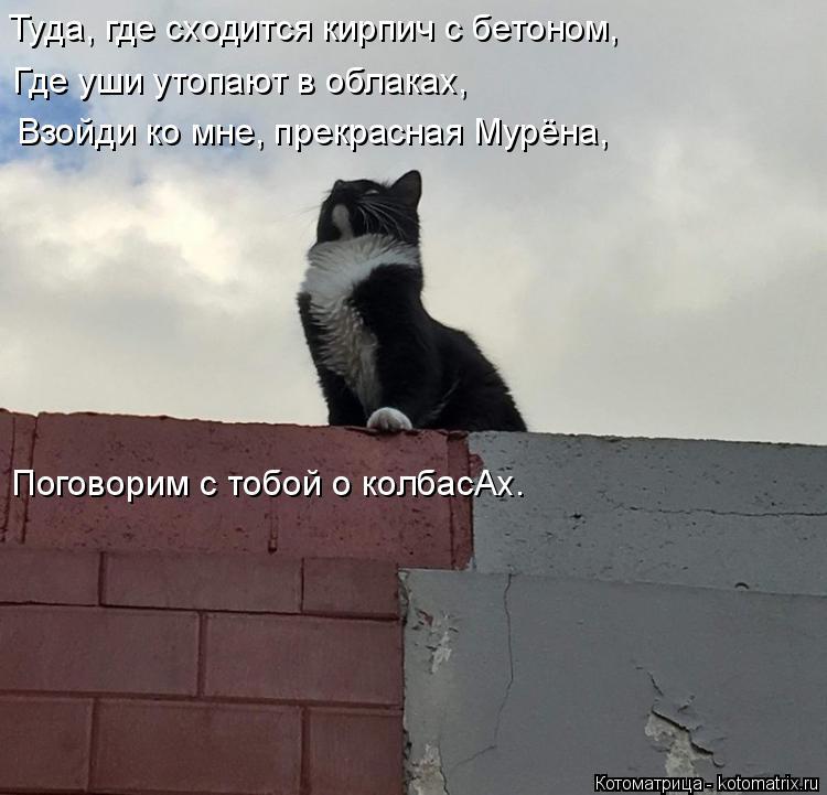 Котоматрица: Туда, где сходится кирпич с бетоном, Где уши утопают в облаках, Взойди ко мне, прекрасная Мурёна, Поговорим с тобой о колбасАх.