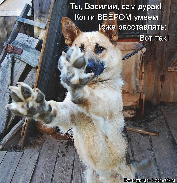 Котоматрица: Ты, Василий, сам дурак! Когти ВЕЕРОМ умеем Тоже расставлять: Вот так!