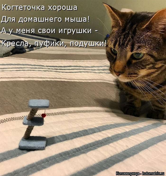 Котоматрица: Когтеточка хороша Для домашнего мыша! А у меня свои игрушки - Кресла, пуфики, подушки!