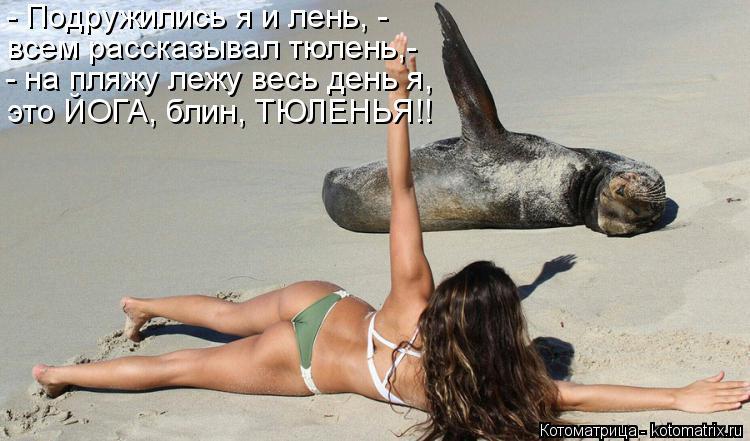 Котоматрица: - Подружились я и лень, - всем рассказывал тюлень,- - на пляжу лежу весь день я, это ЙОГА, блин, ТЮЛЕНЬЯ!!