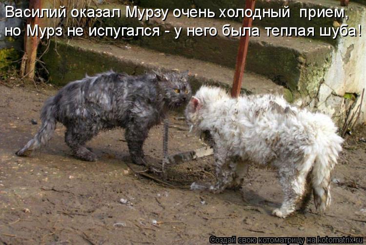 Котоматрица: Василий оказал Мурзу очень холодный  прием, но Мурз не испугался - у него была теплая шуба!