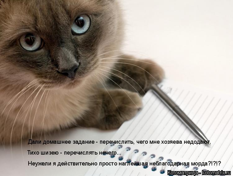 Котоматрица: Дали домашнее задание - перечислить, чего мне хозяева недодают. Тихо шизею - перечислять нечего... Неужели я действительно просто наглейшая