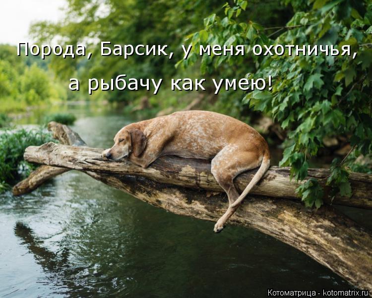 Котоматрица: Порода, Барсик, у меня охотничья, а рыбачу как умею!