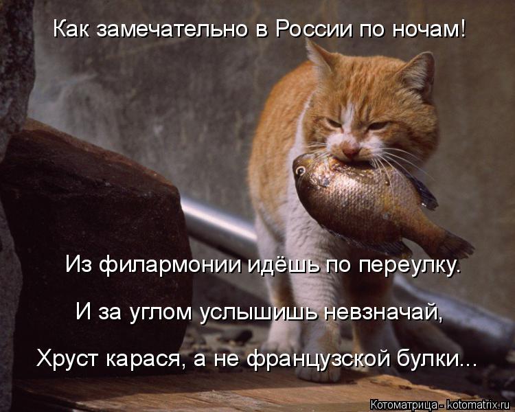 Котоматрица: Как замечательно в России по ночам!  Из филармонии идёшь по переулку.  И за углом услышишь невзначай,   Хруст карася, а не французской булки...