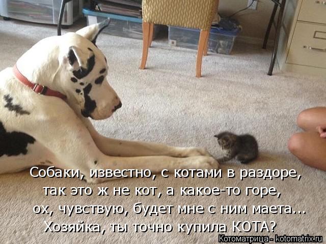 Котоматрица: Собаки, известно, с котами в раздоре, так это ж не кот, а какое-то горе, ох, чувствую, будет мне с ним маета... Хозяйка, ты точно купила КОТА?
