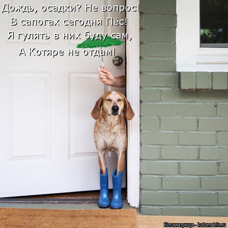 Котоматрица: Дождь, осадки? Не вопрос! В сапогах сегодня Пёс! Я гулять в них буду сам, А Котяре не отдам!