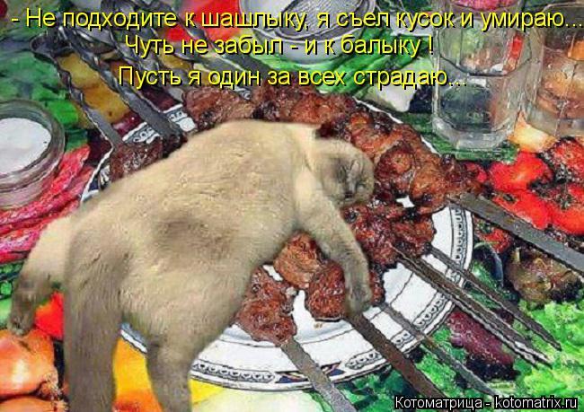 Котоматрица: - Не подходите к шашлыку, я съел кусок и умираю... Чуть не забыл - и к балыку !   Пусть я один за всех страдаю...