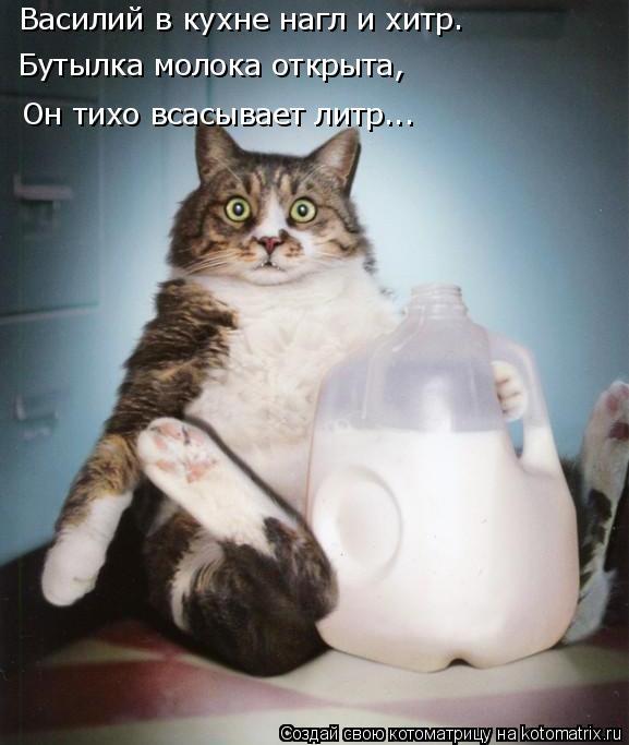 Котоматрица: Василий в кухне нагл и хитр. Бутылка молока открыта, Он тихо всасывает литр...