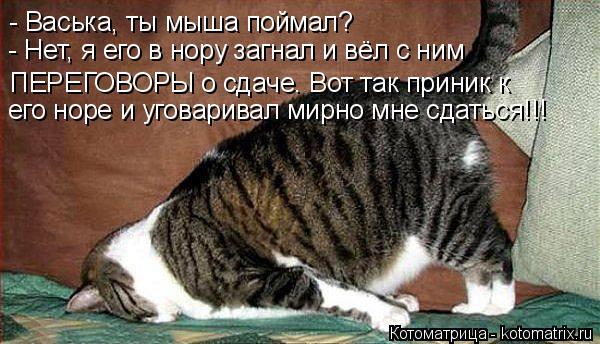Котоматрица: - Васька, ты мыша поймал? - Нет, я его в нору загнал и вёл с ним  ПЕРЕГОВОРЫ о сдаче. Вот так приник к его норе и уговаривал мирно мне сдаться!!!