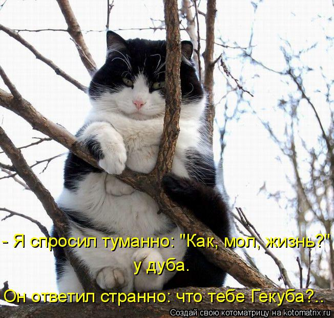 """Котоматрица: у дуба. Он ответил странно: что тебе Гекуба?.. - Я спросил туманно: """"Как, мол, жизнь?"""""""