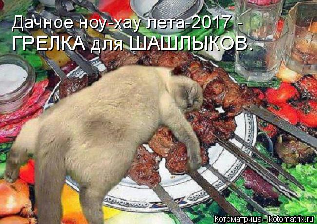 Котоматрица: ГРЕЛКА для ШАШЛЫКОВ. Дачное ноу-хау лета-2017 -