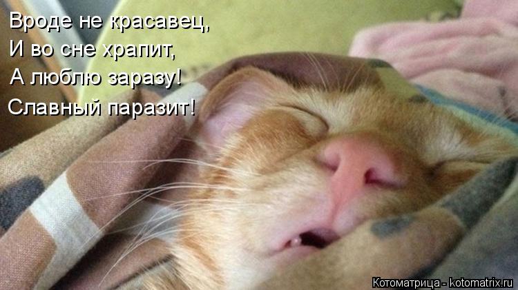 Котоматрица: Вроде не красавец,  И во сне храпит, А люблю заразу! Славный паразит!