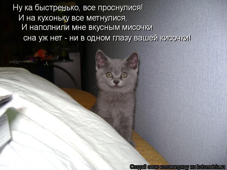 Котоматрица: Ну ка быстренько, все проснулися! И на кухоньку все метнулися, И наполнили мне вкусным мисочки сна уж нет - ни в одном глазу вашей кисочки!