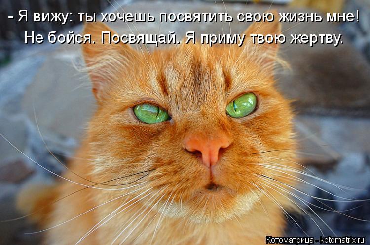 Котоматрица: - Я вижу: ты хочешь посвятить свою жизнь мне! Не бойся. Посвящай. Я приму твою жертву.