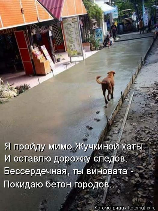 Котоматрица: Я пройду мимо Жучкиной хаты И оставлю дорожку следов. Бессердечная, ты виновата - Покидаю бетон городов...