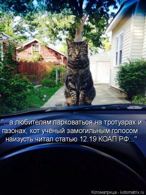 """Котоматрица: """".. а любителям парковаться на тротуарах и газонах, кот учёный замогильным голосом наизусть читал статью 12.19 КОАП РФ..."""""""