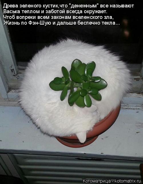 """Котоматрица: Древа зеленого кустик,что """"денежным"""" все называют Васька теплом и заботой всегда окружает. Чтоб вопреки всем законам вселенского зла, Жизнь"""