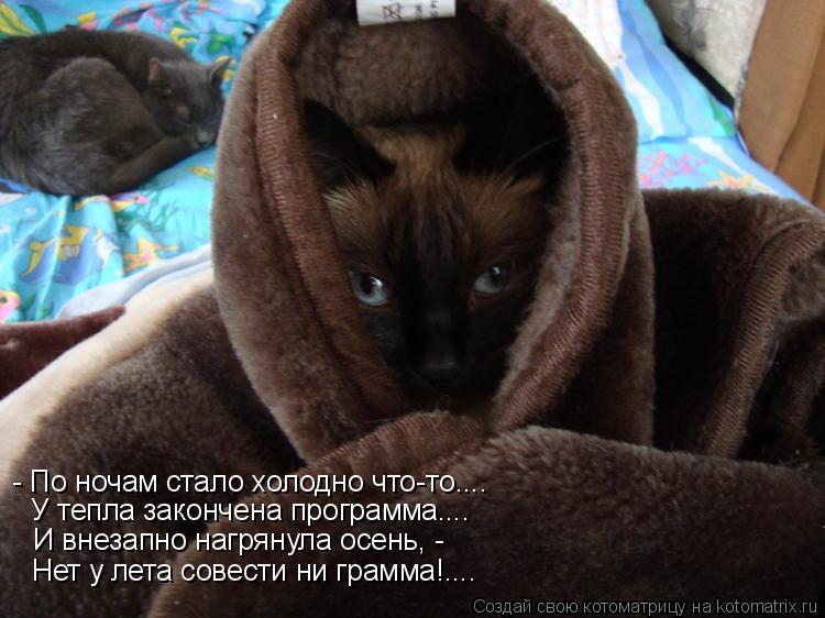 Котоматрица: И внезапно нагрянула осень, - Нет у лета совести ни грамма!.... У тепла закончена программа.... - По ночам стало холодно что-то....