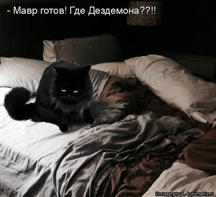 Котоматрица: - Мавр готов! Где Дездемона??!!