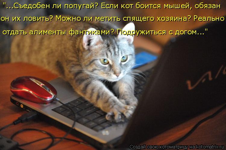 """Котоматрица: """"...Съедобен ли попугай? Если кот боится мышей, обязан  отдать алименты фантиками? Подружиться с догом..."""" он их ловить? Можно ли метить спящего"""