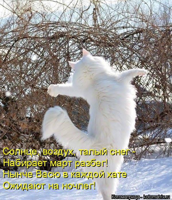 Котоматрица: Солнце, воздух, талый снег - Набирает март разбег! Нынче Васю в каждой хате Ожидают на ночлег!