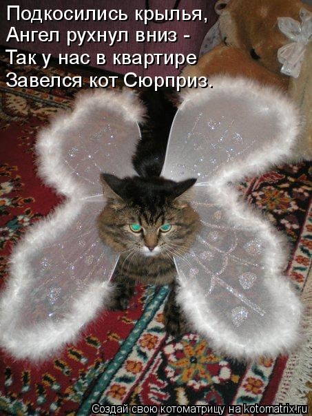 Котоматрица: Подкосились крылья,  Ангел рухнул вниз - Так у нас в квартире Завелся кот Сюрприз.