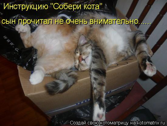 """Котоматрица: Инструкцию """"Собери кота""""  сын прочитал не очень внимательно......"""