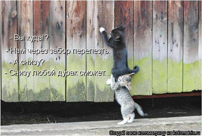 Котоматрица: - Вы куда!? - Нам через забор перелезть. - А снизу? - Снизу любой дурак сможет...