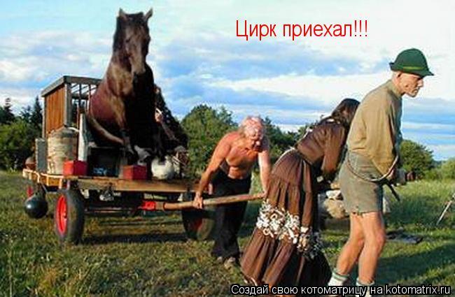 Котоматрица: Цирк приехал!!!