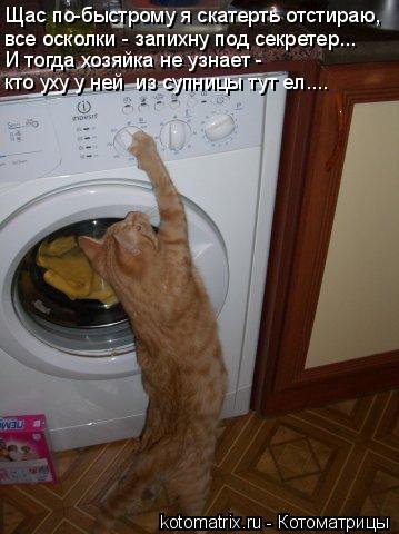 Котоматрица: Щас по-быстрому я скатерть отстираю,  все осколки - запихну под секретер... И тогда хозяйка не узнает - кто уху у ней  из супницы тут ел....