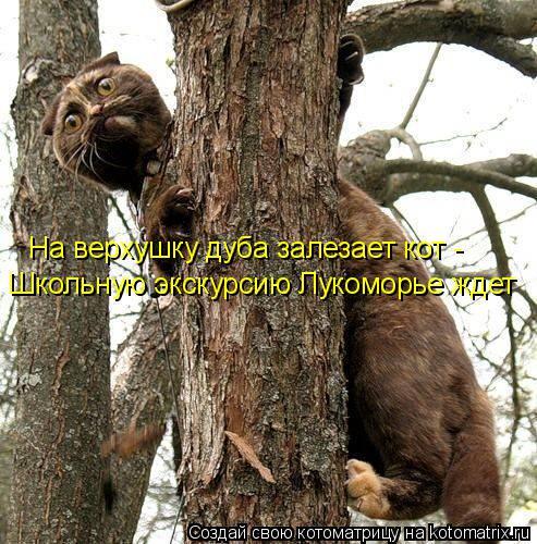 Котоматрица: На верхушку дуба залезает кот - Школьную экскурсию Лукоморье ждет
