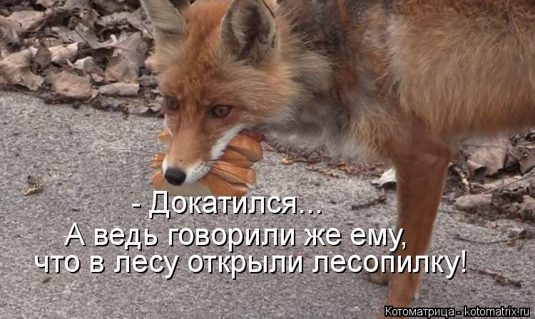 Котоматрица: - Докатился... А ведь говорили же ему, что в лесу открыли лесопилку!