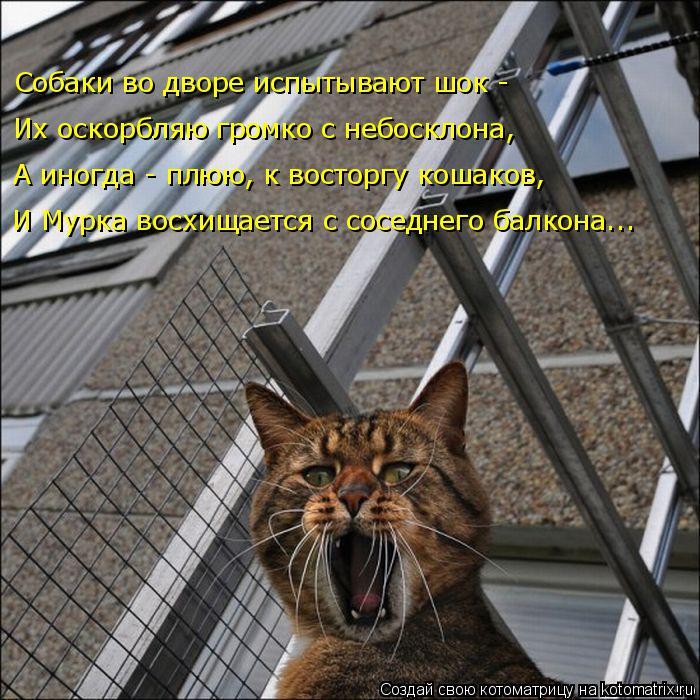 Котоматрица: Собаки во дворе испытывают шок - Их оскорбляю громко с небосклона, А иногда - плюю, к восторгу кошаков, И Мурка восхищается с соседнего балко