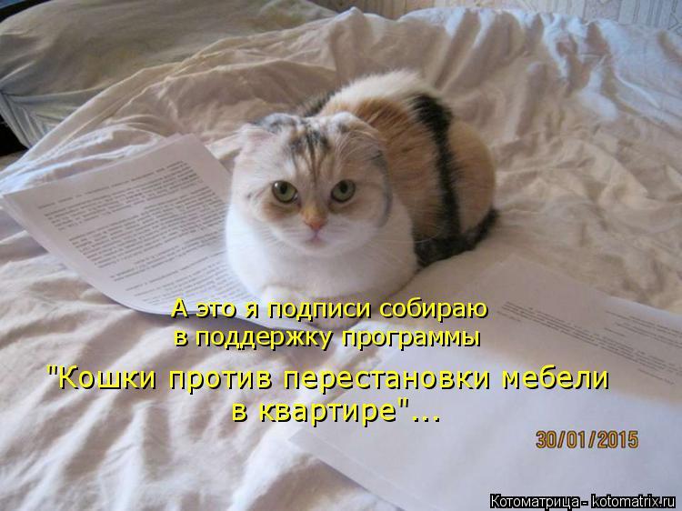 """Котоматрица: А это я подписи собираю в поддержку программы """"Кошки против перестановки мебели в квартире""""..."""