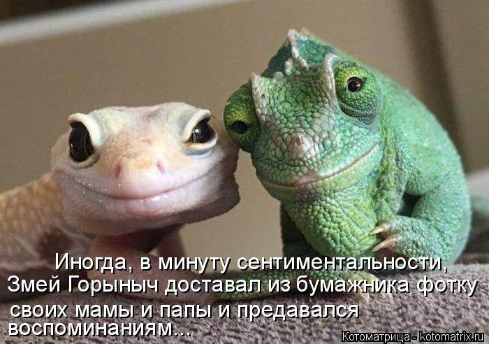 Котоматрица: Иногда, в минуту сентиментальности,   Змей Горыныч доставал из бумажника фотку своих мамы и папы и предавался  воспоминаниям...